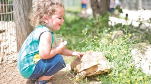 A Children's Zoo That Specialises In Chesed